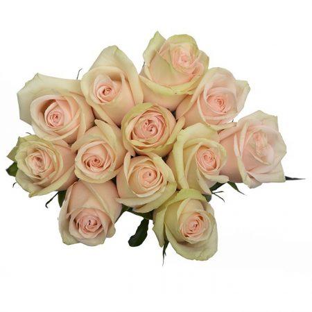 Rose La Perla