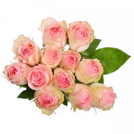 Rose Esperance