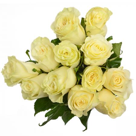 Rose Mondial