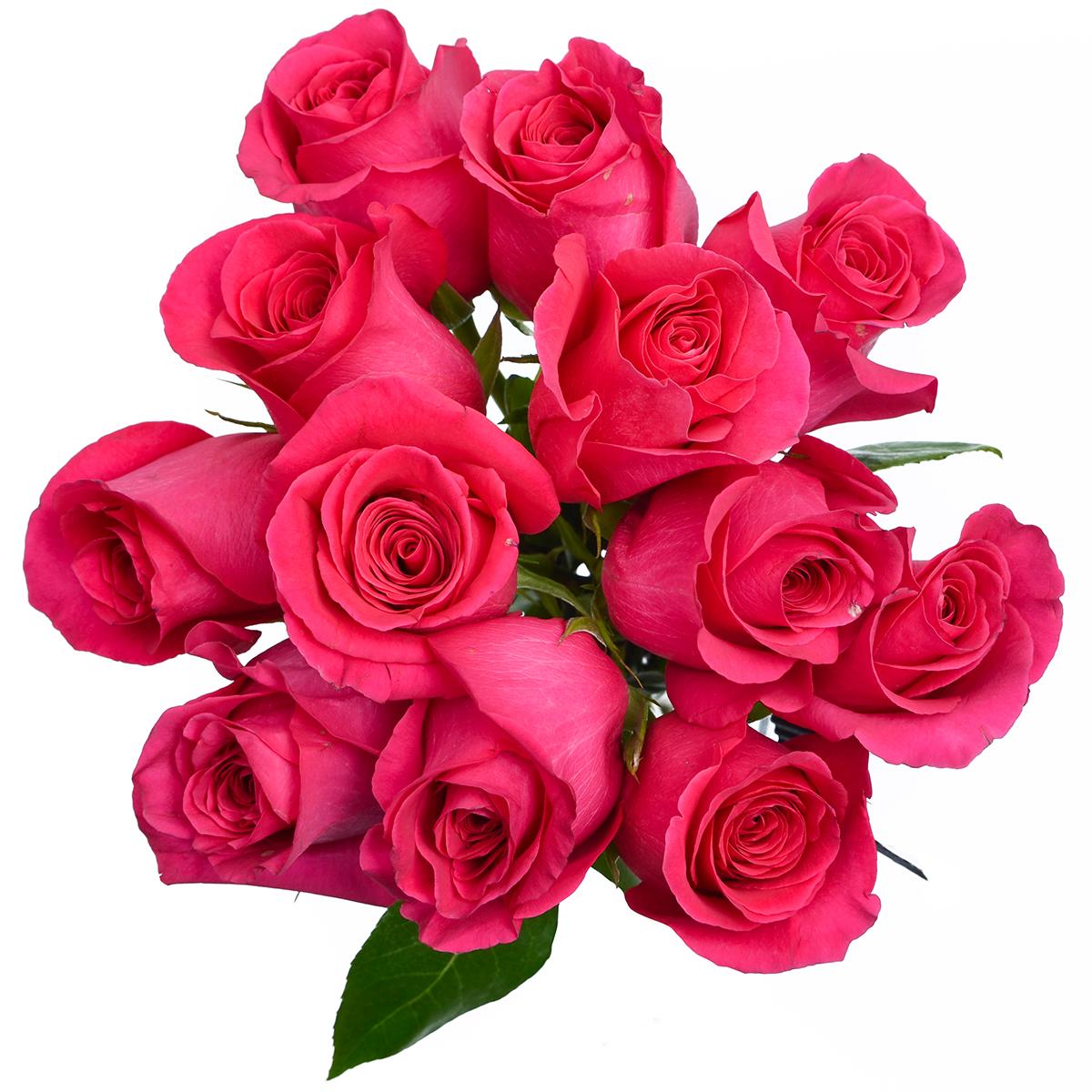 Rose Pink Floyd Stems Ship Cut Flowers
