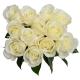 Rose Tibet