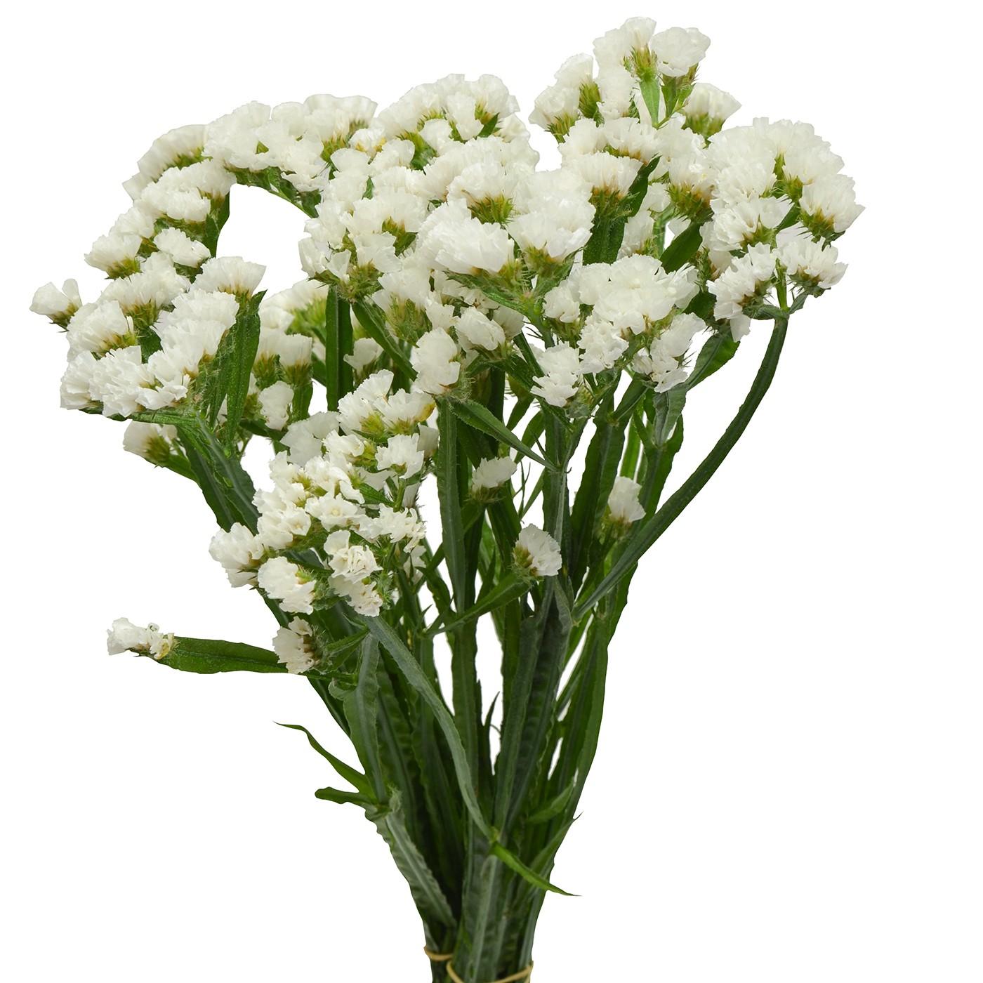 Statice white stems ship cut flowers statice white mightylinksfo