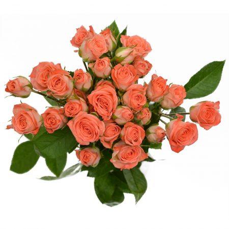 Spray Rose Star Pink
