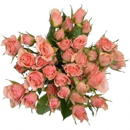 Spray Rose Illse