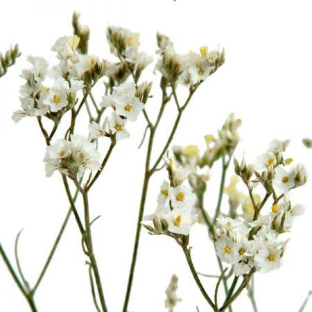 Limonium Sinesis White