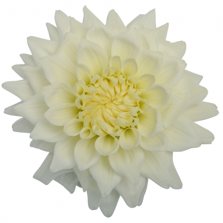 dahlia clearview tammy