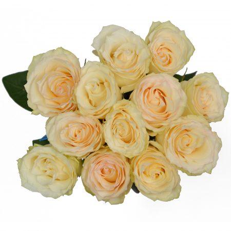 rose cream esperance