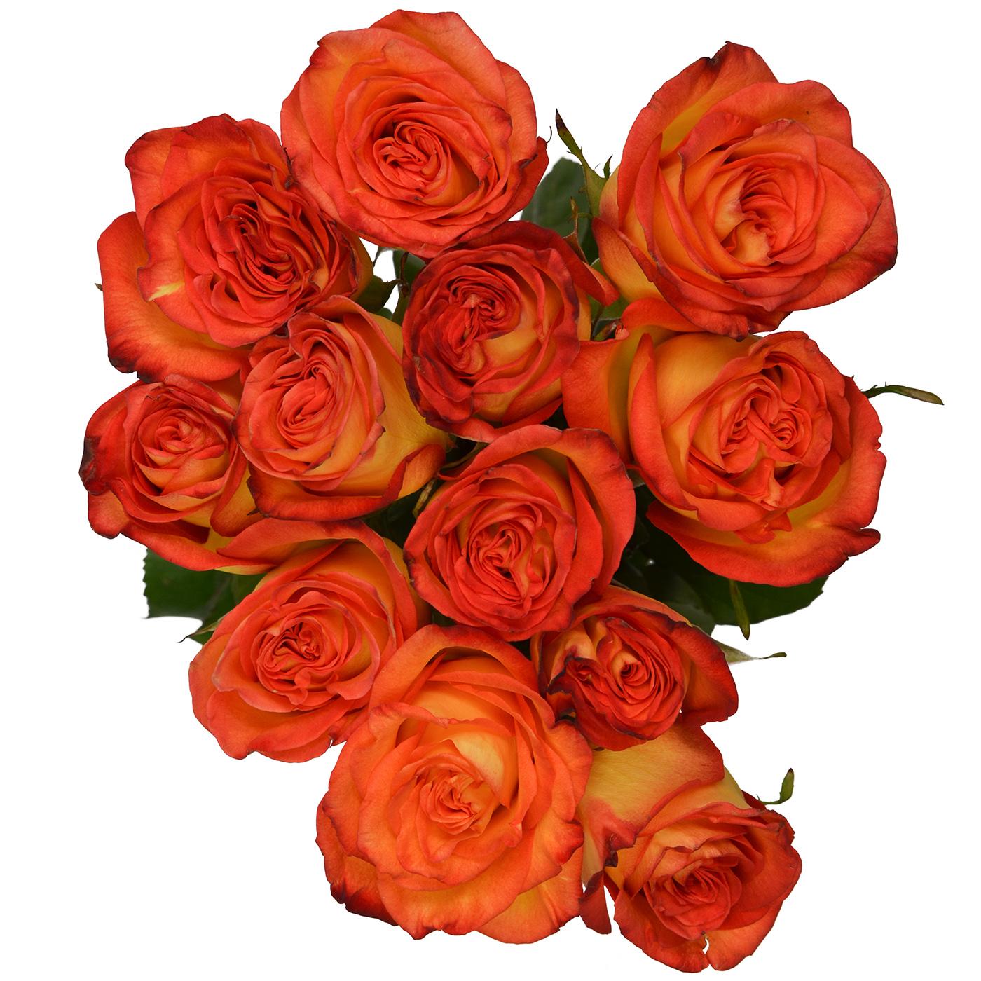 Rose High Magic