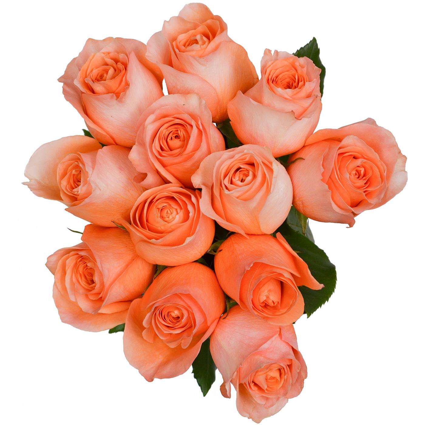 Коралловые розы открытки