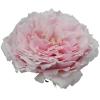 garden rose tsumugi