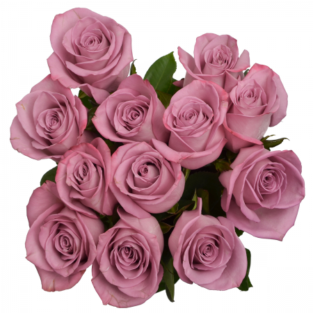 Rose Moody Blues