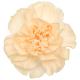 Carnation Peach Melba