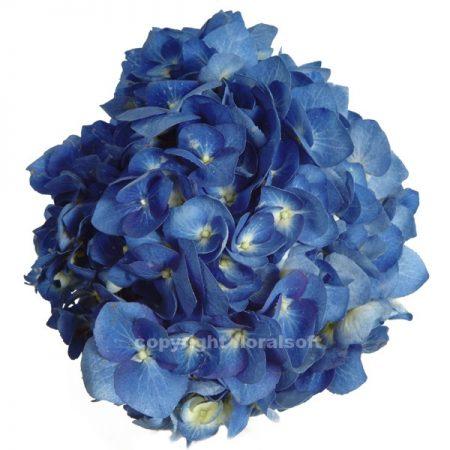 Hydrangea Natural Dark Blue