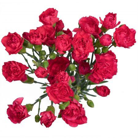 mini carnation hot pink