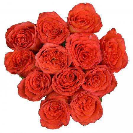 rose high and orange magic