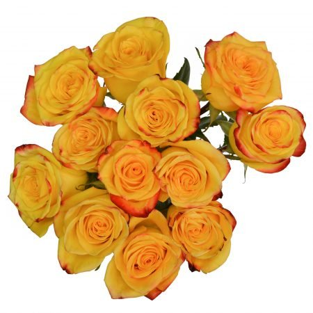 rose high and yellow magic flame