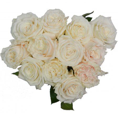 rose playa blanca