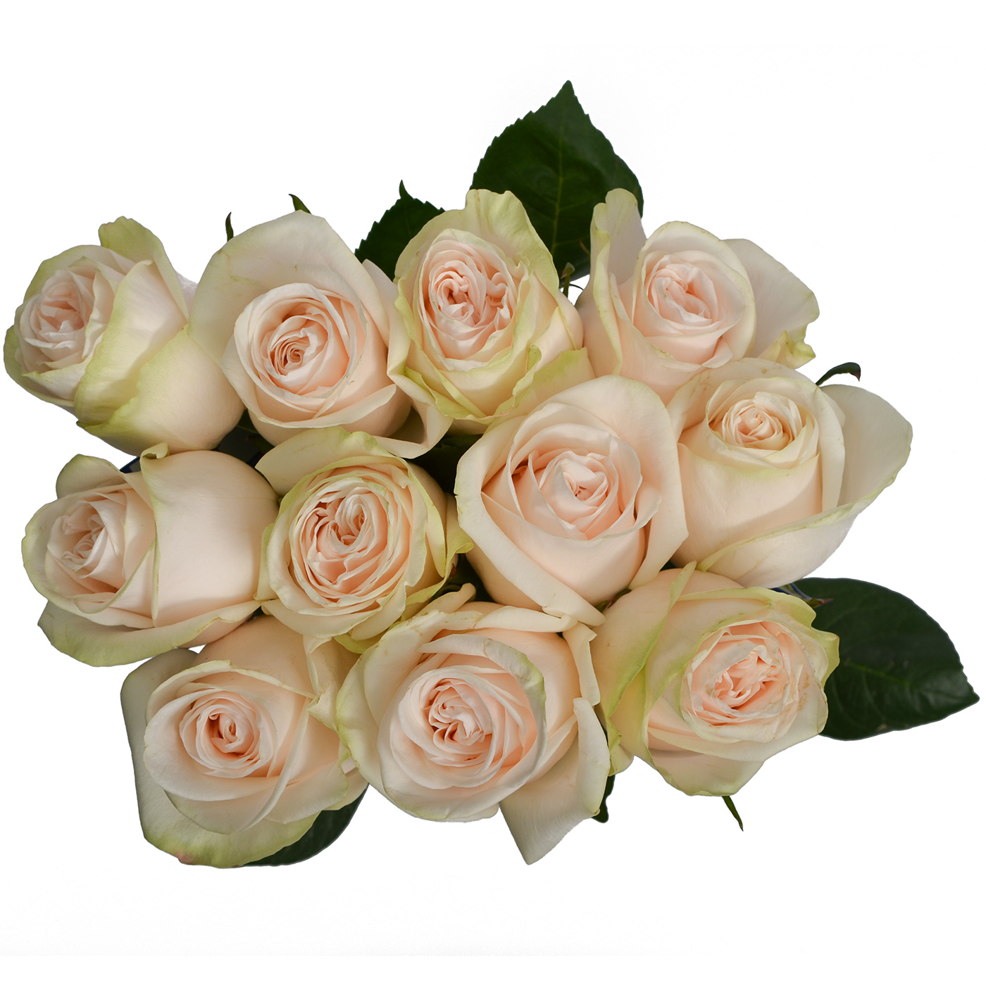 Beautiful Rose Garden Spirit