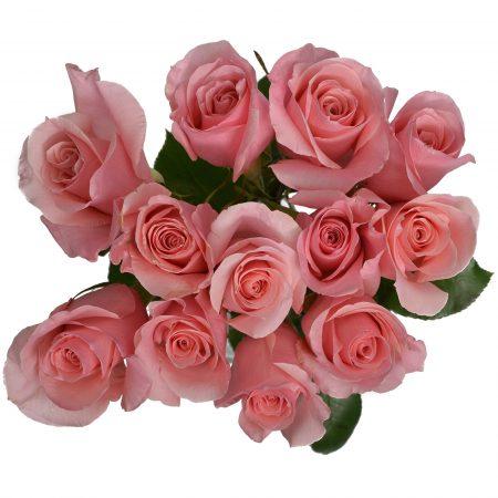 rose high and bonita