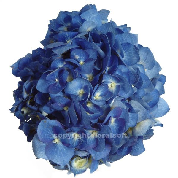 Stems market fresh cut flowers for everyday and events hydnatdkblu mightylinksfo