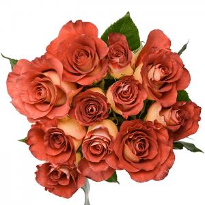 ros-leonidas